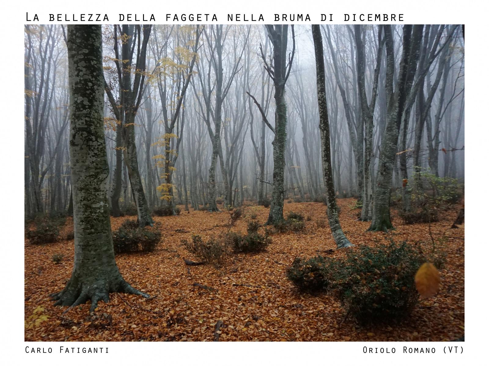 12_LA-BELLEZZA-DELLA-FAGGETA_REV
